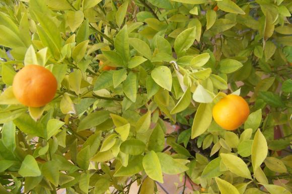 http://lancien.cowblog.fr/images/Fleurs4/1003692-copie-1.jpg