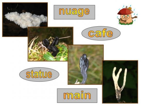 http://lancien.cowblog.fr/images/Fleurs4/Diapositive09.jpg