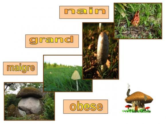 http://lancien.cowblog.fr/images/Fleurs4/Diapositive11.jpg