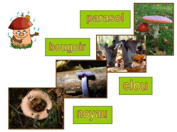 http://lancien.cowblog.fr/images/Fleurs4/Diapositive13.jpg