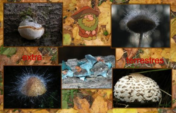 http://lancien.cowblog.fr/images/Fleurs4/Diapositive15.jpg