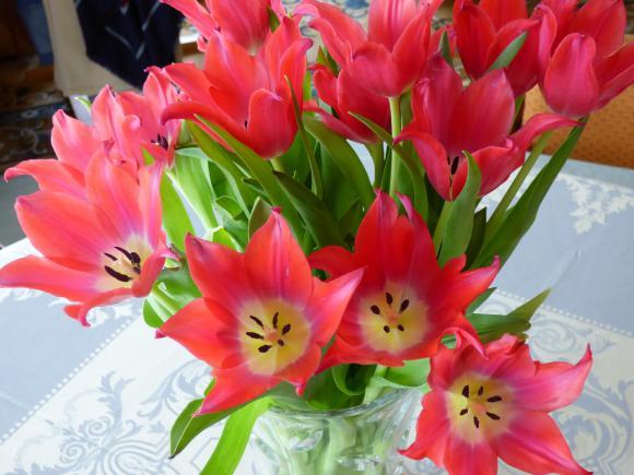 http://lancien.cowblog.fr/images/Fleurs4/P1010247.jpg