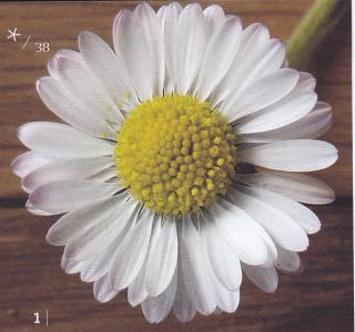 http://lancien.cowblog.fr/images/Fleurs4/fleur1.jpg