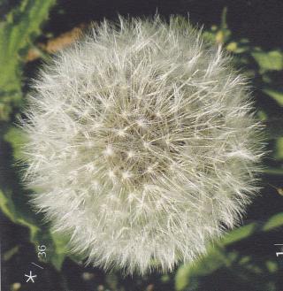 http://lancien.cowblog.fr/images/Fleurs4/fleur14.jpg