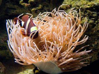 http://lancien.cowblog.fr/images/Image4/A7.jpg