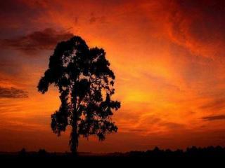 http://lancien.cowblog.fr/images/Images2-1/Diapositive14.jpg