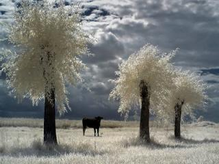 http://lancien.cowblog.fr/images/Paysages2/Diapositive17-copie-7.jpg