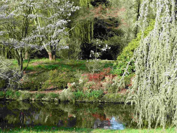 http://lancien.cowblog.fr/images/Paysages6/arbo1.jpg