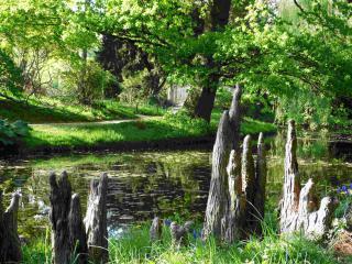 http://lancien.cowblog.fr/images/Paysages6/arbo3.jpg