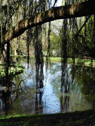 http://lancien.cowblog.fr/images/Paysages6/arbo5.jpg