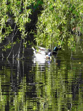 http://lancien.cowblog.fr/images/Paysages6/arbo6.jpg
