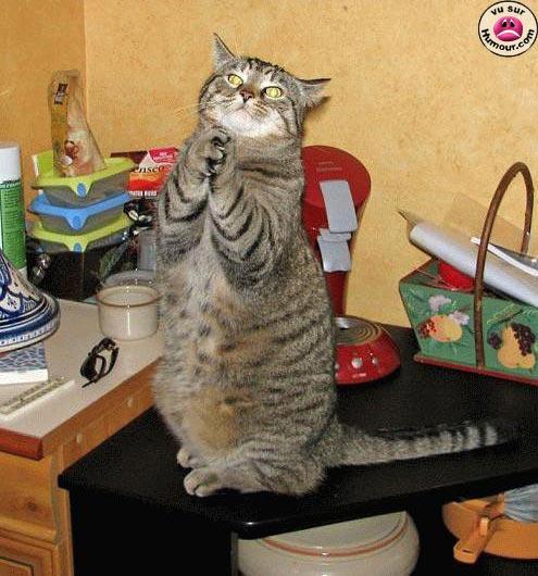 http://lancien.cowblog.fr/images/Photoscomiques1/MonDieudonnezmoimasour.jpg
