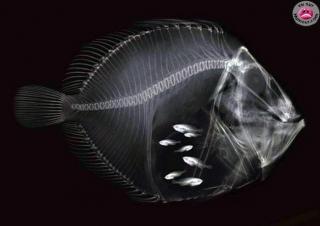 http://lancien.cowblog.fr/images/Photoscomiques1/poisson.jpg