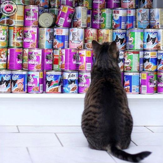 http://lancien.cowblog.fr/images/Photoscomiques1/quechoisir.jpg