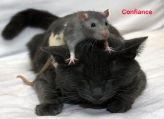 http://lancien.cowblog.fr/images/Photoscomiques2/Confiance.jpg