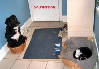 http://lancien.cowblog.fr/images/Photoscomiques2/Soumission.jpg