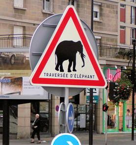http://lancien.cowblog.fr/images/Photoscomiques2/elephant.jpg