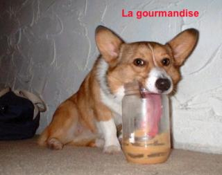 http://lancien.cowblog.fr/images/Photoscomiques2/gourmandise.jpg