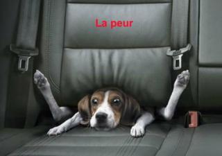 http://lancien.cowblog.fr/images/Photoscomiques2/peur.jpg