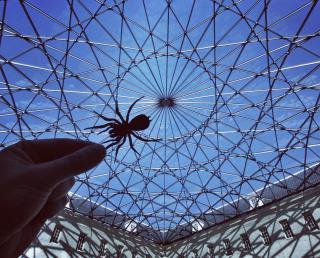 http://lancien.cowblog.fr/images/Photoscomiques3/10217330latoiledaraigneegeantedumuseedelamarine.jpg