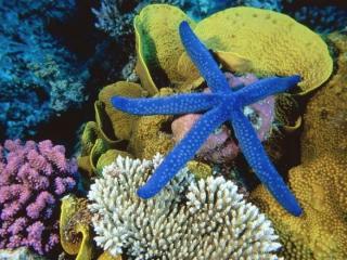 http://lancien.cowblog.fr/images/Photoscomiques3/sousleau024.jpg
