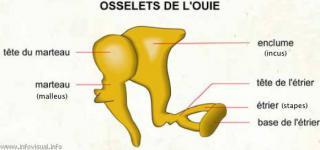 http://lancien.cowblog.fr/images/SanteBiologie-1/4298156.jpg