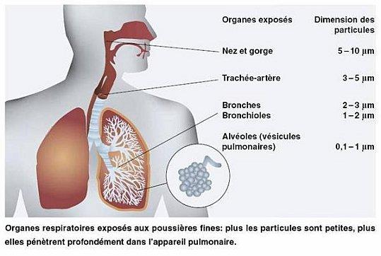 http://lancien.cowblog.fr/images/SanteBiologie-1/ExpositionauxPMOFEV.jpg