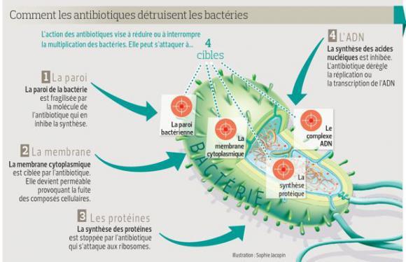 http://lancien.cowblog.fr/images/SanteBiologie-1/PHO1a6956f2be5811e3b8357d1bfa5c0865620x400.jpg