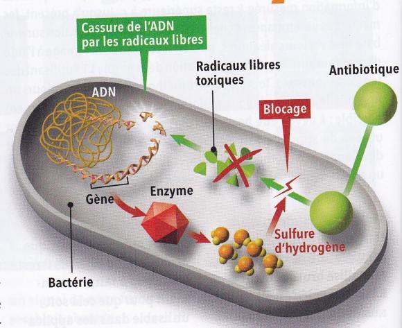 http://lancien.cowblog.fr/images/SanteBiologie-1/SH2bacteries.jpg