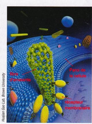 http://lancien.cowblog.fr/images/SanteBiologie-1/celluleamiante.jpg