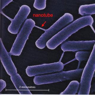 http://lancien.cowblog.fr/images/SanteBiologie-1/nanotube.jpg