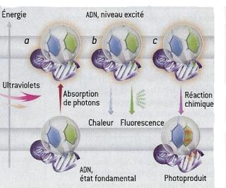 http://lancien.cowblog.fr/images/Sciences/-copie-4.jpg