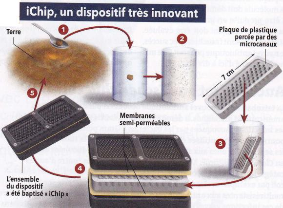 http://lancien.cowblog.fr/images/Sciences2/chip.jpg