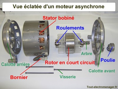 http://lancien.cowblog.fr/images/Sciences2/orgavueeclamoteasyn.jpg