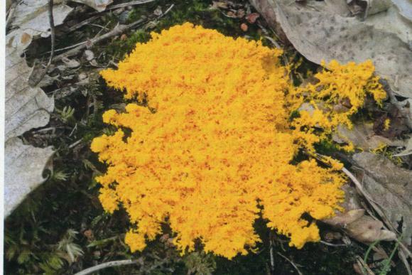 http://lancien.cowblog.fr/images/Vegetationarbres2/blob.jpg