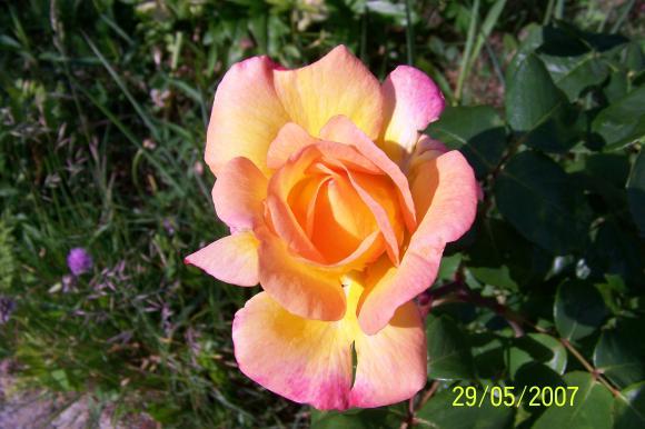 http://lancien.cowblog.fr/images/ZFleurs2/1000030.jpg