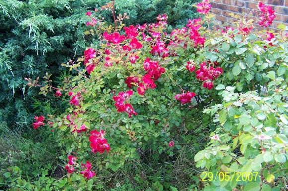 http://lancien.cowblog.fr/images/ZFleurs2/1000035.jpg