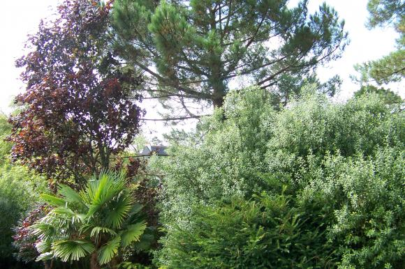 http://lancien.cowblog.fr/images/ZFleurs2/1000869.jpg