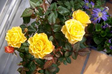 http://lancien.cowblog.fr/images/ZFleurs2/1001014.jpg