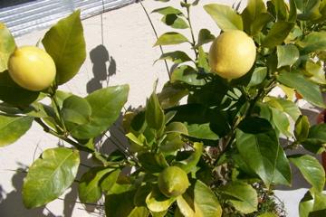 http://lancien.cowblog.fr/images/ZFleurs2/1001049.jpg