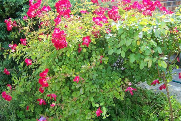 http://lancien.cowblog.fr/images/ZFleurs2/1001239.jpg