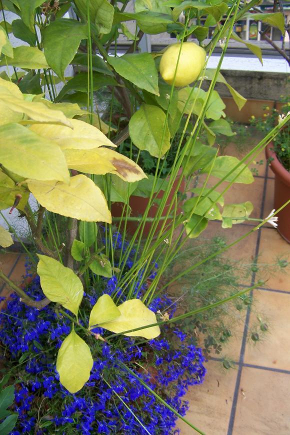 http://lancien.cowblog.fr/images/ZFleurs2/1001244.jpg