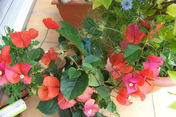 http://lancien.cowblog.fr/images/ZFleurs2/1001245.jpg