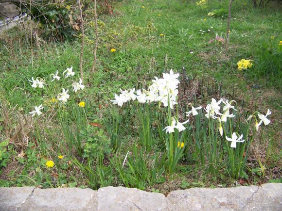 http://lancien.cowblog.fr/images/ZFleurs2/1001832.jpg