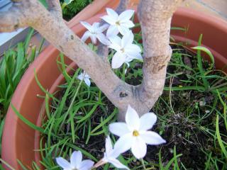 http://lancien.cowblog.fr/images/ZFleurs2/1001833.jpg