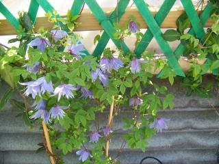 http://lancien.cowblog.fr/images/ZFleurs2/1001845.jpg