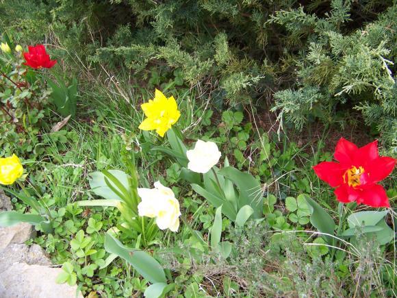 http://lancien.cowblog.fr/images/ZFleurs2/1001858.jpg