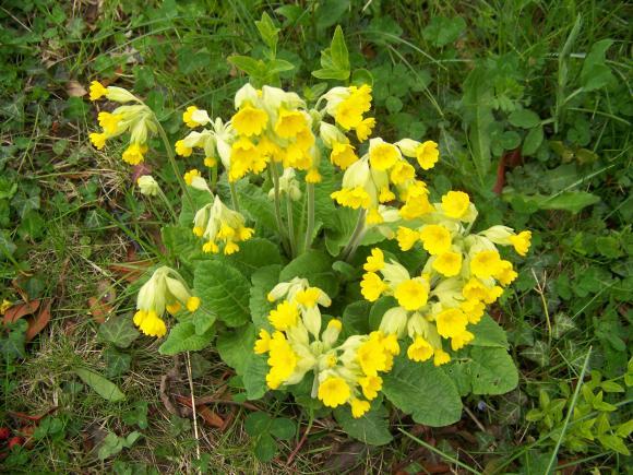 http://lancien.cowblog.fr/images/ZFleurs2/1001863.jpg