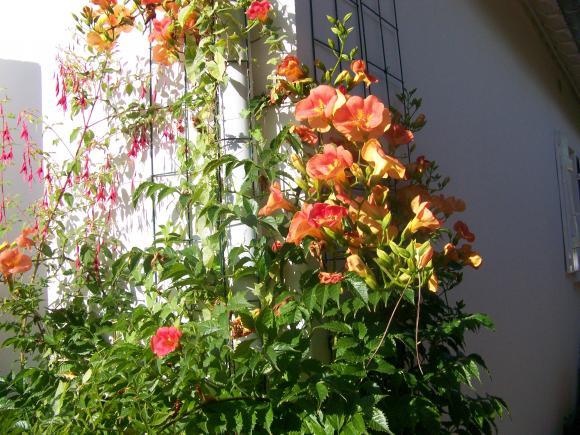 http://lancien.cowblog.fr/images/ZFleurs2/1002939.jpg