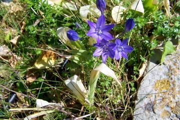 http://lancien.cowblog.fr/images/ZFleurs2/Copiede1001264.jpg